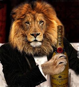 lions_ball